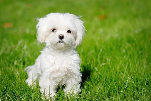 犬の種類小型犬から大型犬まで