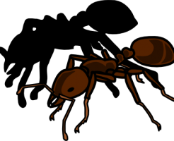 ヒアリの毒性と駆除法